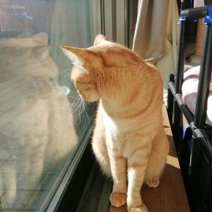 陽向で まったり~ 猫動画