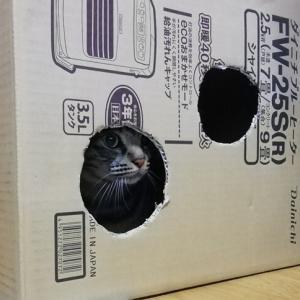 箱脱出 猫動画