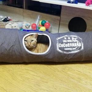 トンネルの中で 爆発蹴り 猫動画