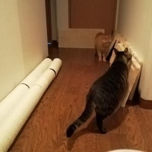 エレベーターで搬入 猫動画