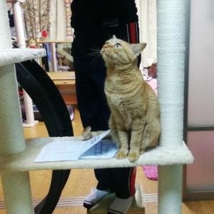 新タワー 設置 猫動画