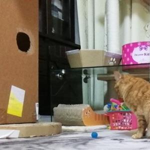デカ箱に入りたい 猫動画