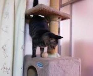 セブンの変な行動 猫動画
