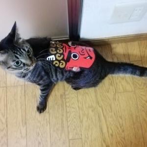 鬼のお面 猫動画