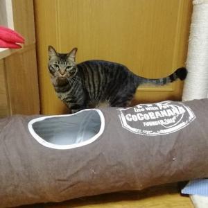 サランラップボール 探しゲーム 猫動画
