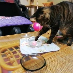 水ポチャ防止策 1 猫動画
