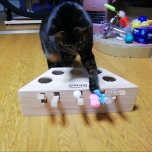 オモチャに ひよこをペタ  猫動画