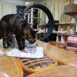 水ポチャ防止継続中 猫動画