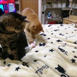ひよこ🐥の 水ポチャ防止策 猫動画