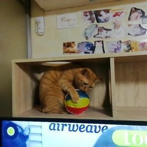 紙風船 猫動画