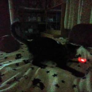 暗闇ニャンビーム 猫動画