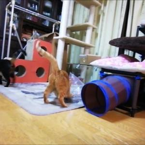 袋in ひよこ 2回目 猫動画