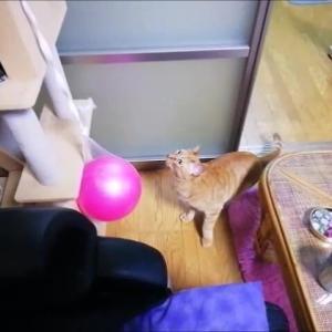 いきなりパンチ 猫動画