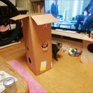 縦長箱 から どう出るのかな 猫動画