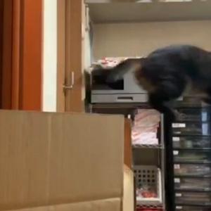 華麗な ジャンプ 猫動画