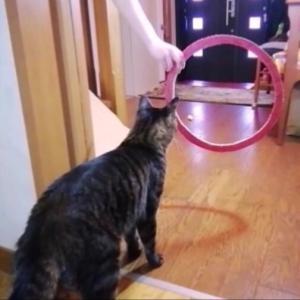 輪くぐり セブン編 猫動画