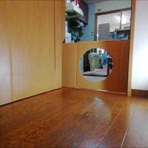 お家チャレンジ  猫動画