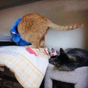 3段ハウス上は お気に入り 猫動画