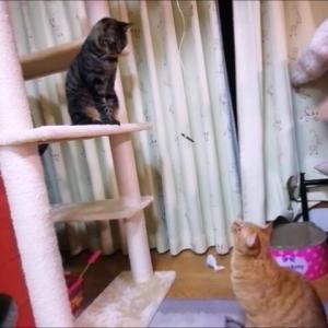 おやつ釣り 猫動画