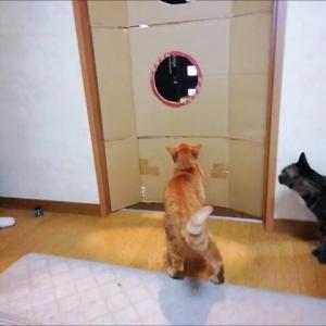 丸穴22㎝ チャレンジ 3   猫動画