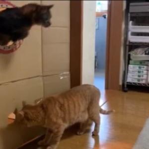 丸穴19㎝ チャレンジ4 猫動画