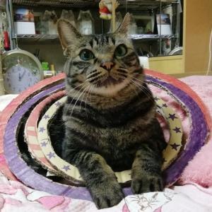 6歳の誕生日 猫生初ブランコ 猫動画