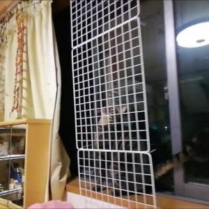 アミアミ登り チャレンジ 猫動画