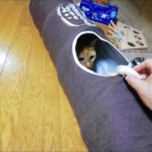 ファーネズミ トンネルコラボ 猫動画