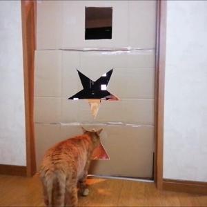 三角 四角 星 どれを 選ぶか THEチャレンジ 猫動画
