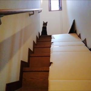 ニャオスカ イヤコール 猫動画