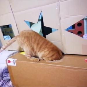 □ ☆ △ 穴 ジャンプ リベンジ 猫動画