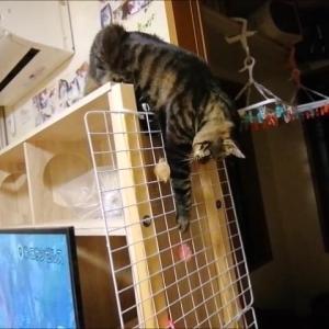 アミアミ設置完了 猫動画