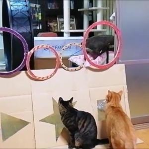 輪っか ジャンプ エイトのリベンジ編 猫動画