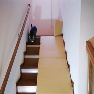 狭い階段で 持って来い遊びが出来るか 猫動画