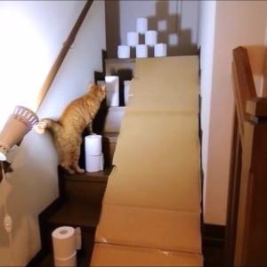 階段障害物 猫動画