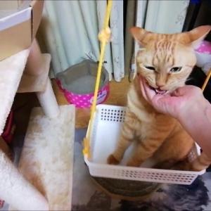 ブランコ リベンジ 猫動画