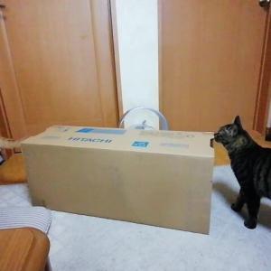 80㎝の 箱で チャレンジャー 猫動画