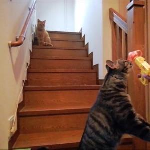 ニャンコプター 猫動画