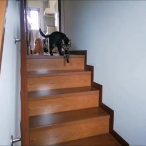 一緒に出勤 朝の光景 猫動画