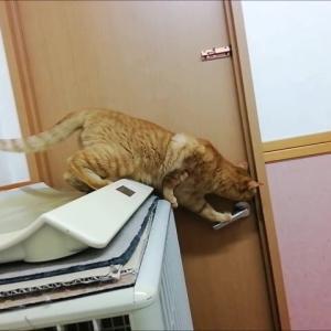 鍵かかってますよ~ 猫動画