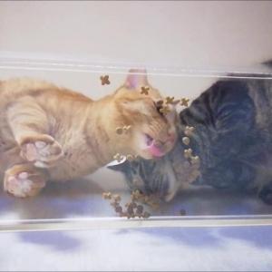 キャットウォーク うまうまご飯 猫動画