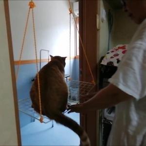アミアミブランコ 初挑戦 猫動画