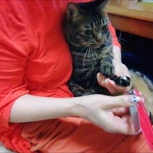 爪切りタイム 猫動画