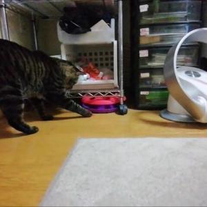 新タコ🐙オモチャ 猫動画