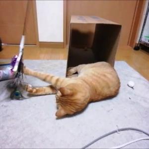 エアコン箱トンネル遊び 猫動画