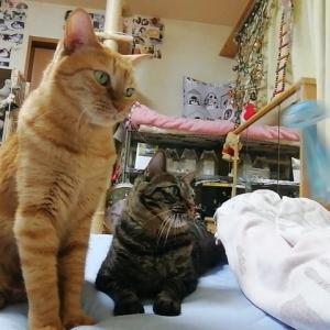 新オモチャ イカ釣り 猫動画