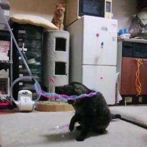 新ヒラヒラ ロングオモチャ 猫動画