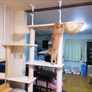 移動したキャットタワー 猫動画