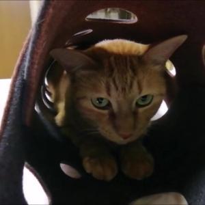 フェルトトンネルと 空箱 猫動画