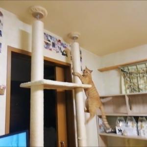 木登りタワー サル登り 猫動画